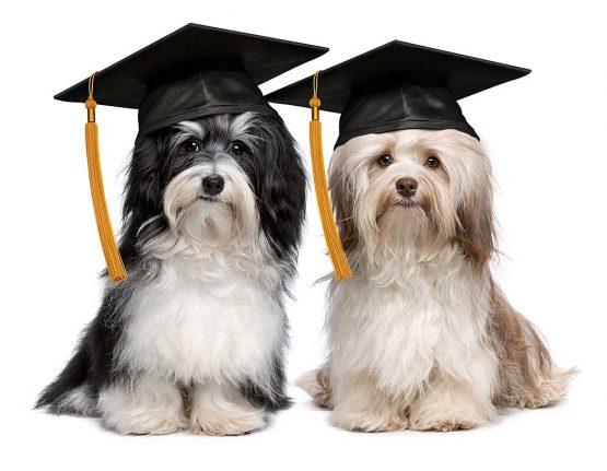puppy-university